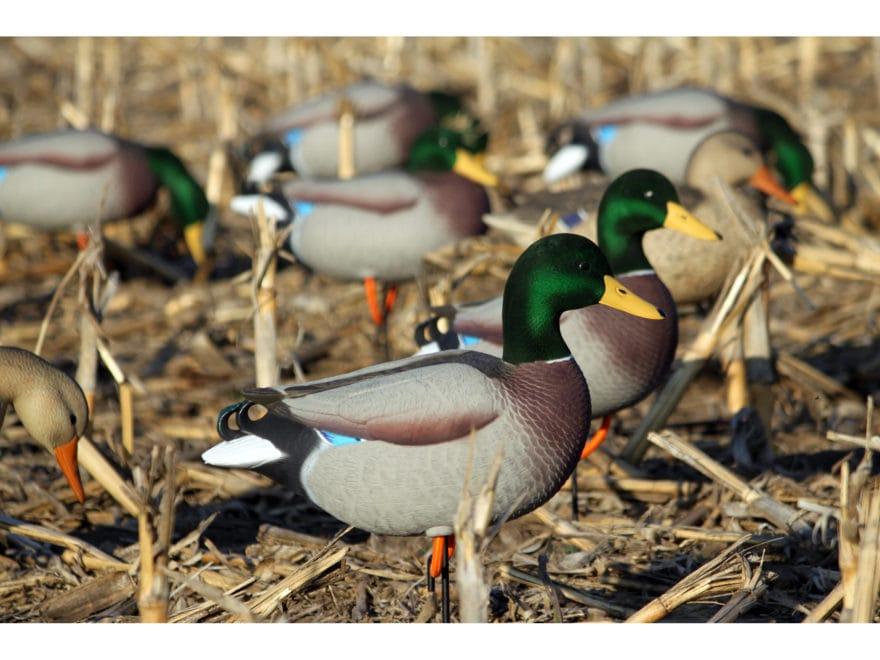 Dakota Decoy X-Treme Full Body Mallard Duck Decoys Pack of 12