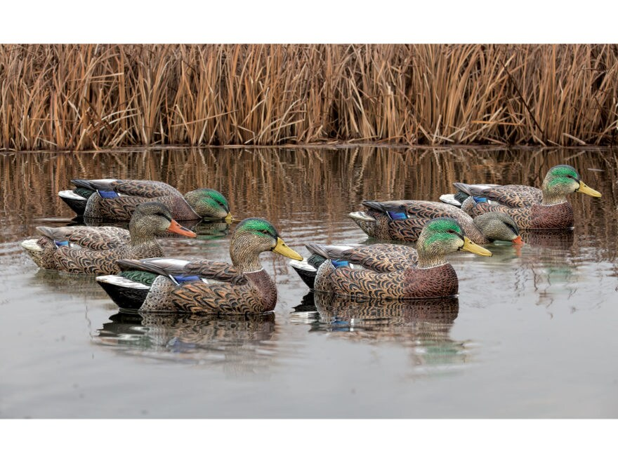 Avian-X Top Flight Early Season Mallard Duck Decoy Pack of 6
