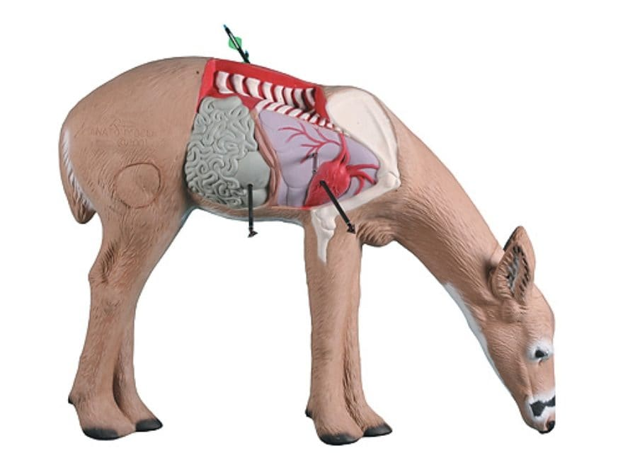 Rinehart Anatomy Deer 3D Foam Archery Target