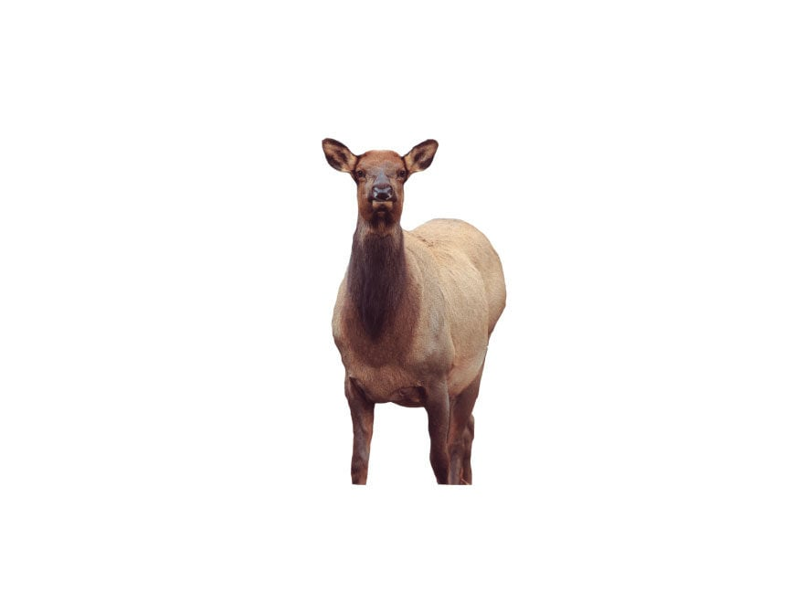 Montana Decoy Eichler Elk Decoy Cotton, Polyester and Steel