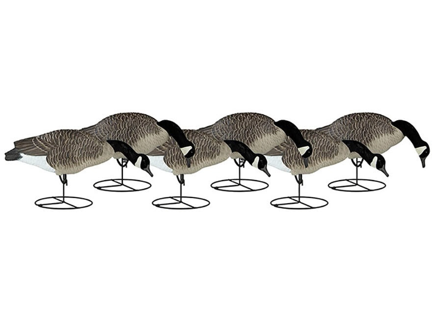 Dakota Decoy Signature Series Full Body Feeder Canada Goose Decoy Pack of 6