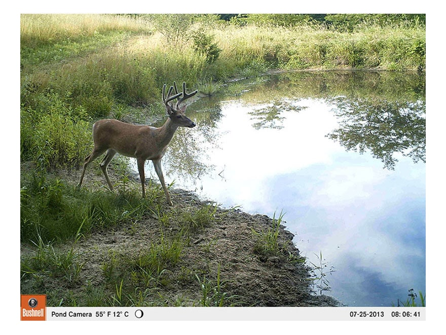 BUSHNELL TROPHY CAM HD 119599C CAMERA DRIVERS FOR MAC DOWNLOAD