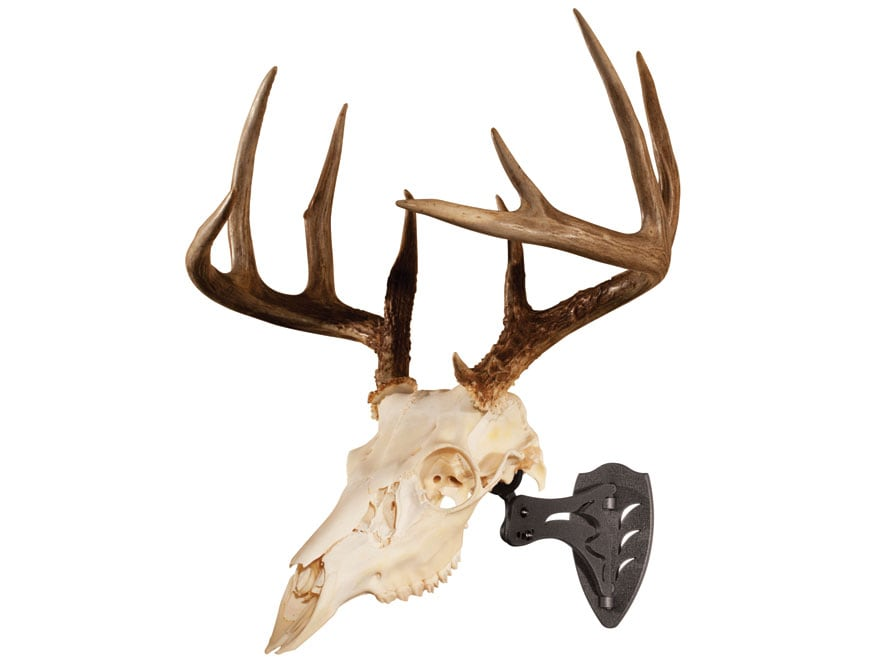 Perfect Kit for Hanging and Mounting Taxidermy Deer Antlers and Other Skulls for Display Skull Hooker Little Hooker European Trophy Mount Available in Graphite Black and Robust Brown
