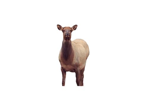 Montana Decoy Eichler Elk Decoy Cotton, Polyester and Steel