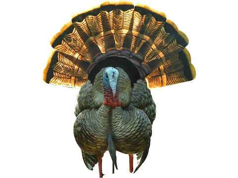 Avian-X HDR Strutter HDR Turkey Decoy