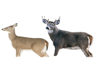 Montana Decoy Whitetail Dream Team Deer Decoy Combo