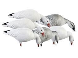 GHG Pro-Grade Feeder Pack Full Body Snow Goose Decoy Pack of 6