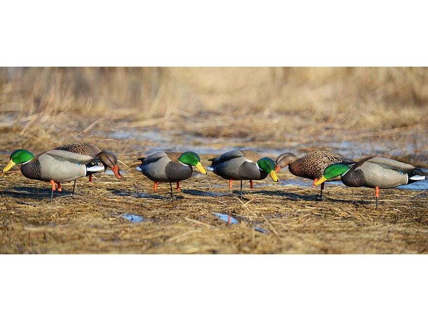 GHG Pro-Grade Full Body Flocked Head Mallard Duck Decoys Harvester Pack of 12