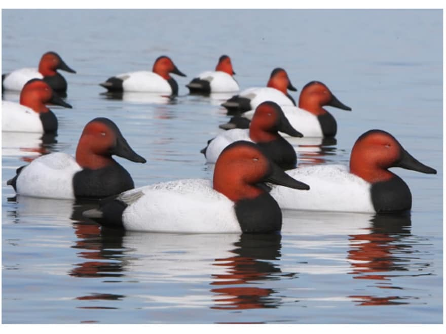 GHG Over-Size Weighted Keel Canvasback Duck Decoy Pack of 6